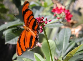 Butterfly Farm - Accommodation in Surfers Paradise