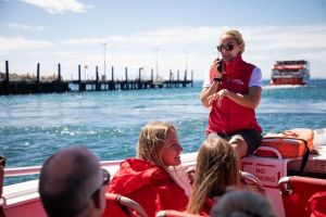 Rottnest Island Tour from Perth or Fremantle including Adventure Speed Boat Ride - Accommodation in Surfers Paradise