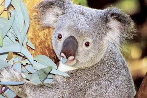 Perth Zoo General Entry Ticket and Sightseeing Cruise - Accommodation in Surfers Paradise