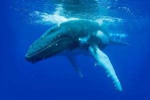 Dunsborough Whale Watching Eco Tour - Accommodation in Surfers Paradise
