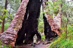 Margaret River Wineries Caves Ocean and Karri - Air  Ground Tour - Accommodation in Surfers Paradise