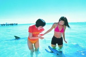 Monkey Mia Dolphins  Shark Bay Air Tour From Perth - Accommodation in Surfers Paradise