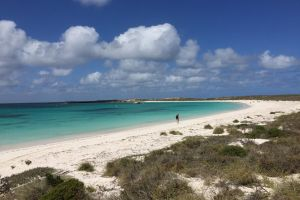 Abrolhos Island Half Day Fly and Flipper - Accommodation in Surfers Paradise