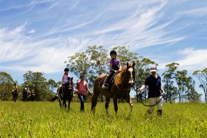 Port Macquarie Horse Riding Centre - Accommodation in Surfers Paradise