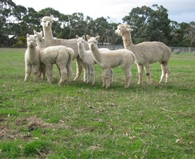 Blackgate Lodge Alpaca Stud - Accommodation in Surfers Paradise
