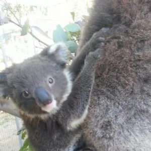 West Oz Wildlife Petting Zoos - Accommodation in Surfers Paradise